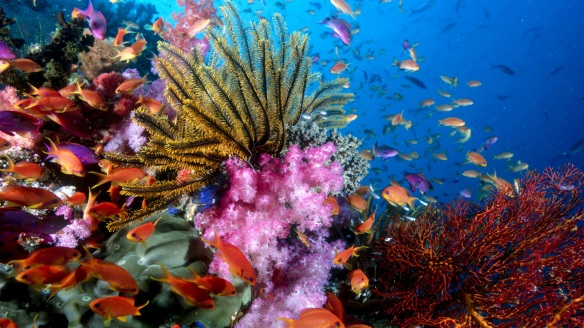 Coral+Reefs_wallpapers_227